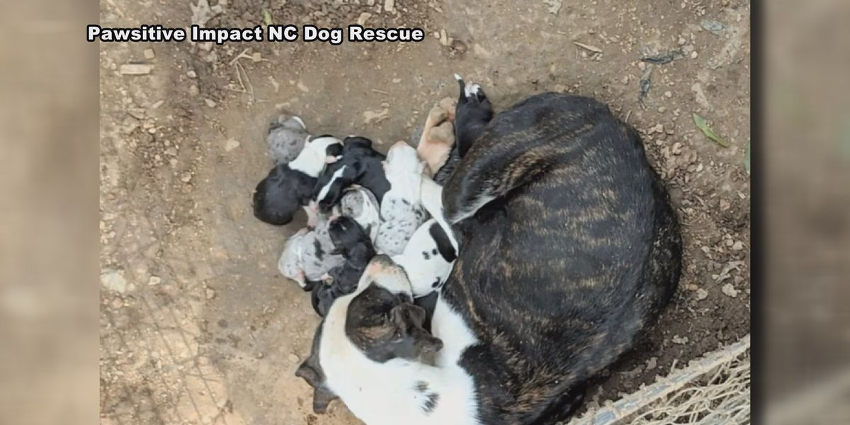 Petition calls for Monroe animal welfare committee after 50 dogs rescued from hoarding situation