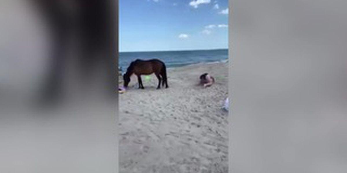 Woman smacks wild horse with shovel, gets kicked