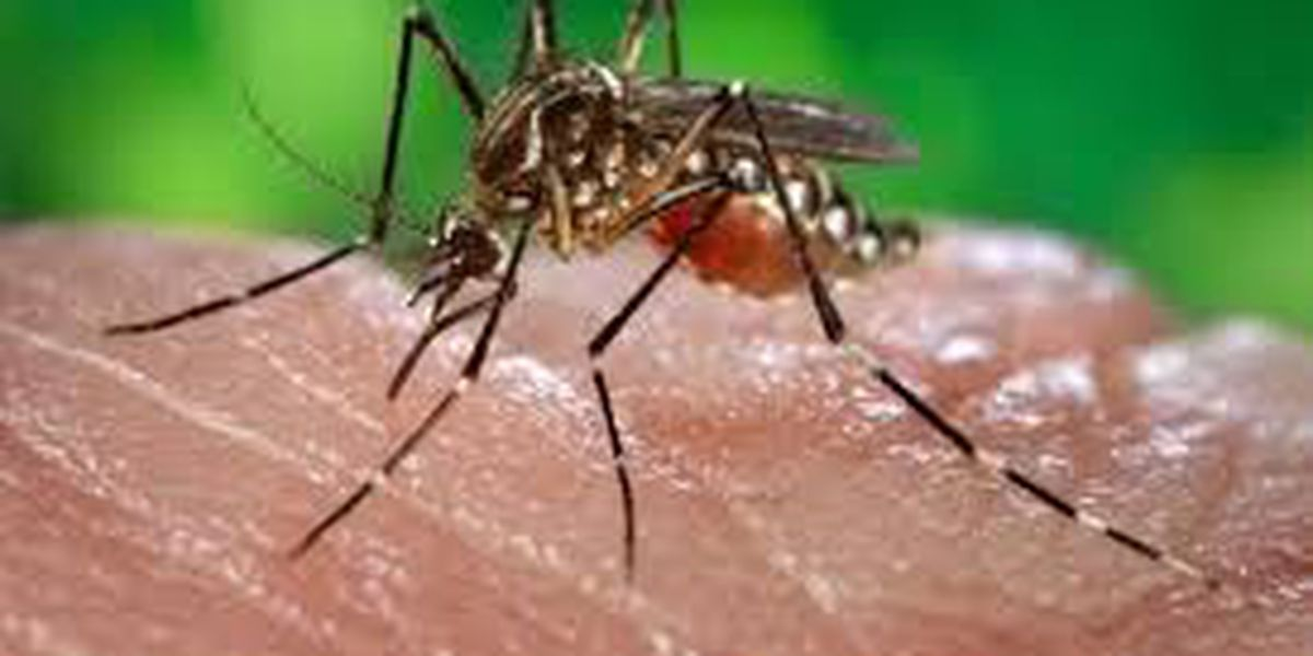 Insecticide to be sprayed after third confirmed West Nile case in York County