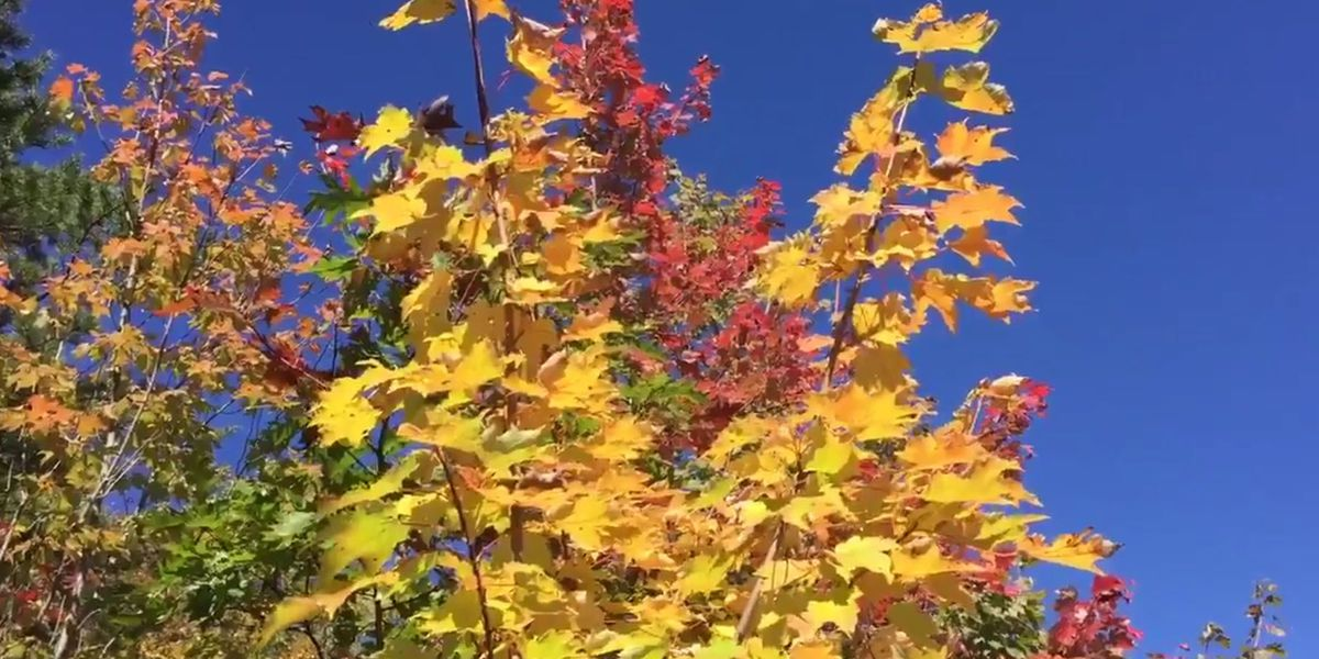 Can fall leaves survive the coming storm?