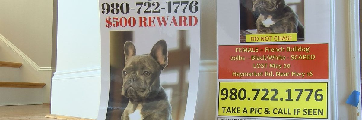 Bizarre circumstances surround disappearance of a Mountain Island Lake family's dogs