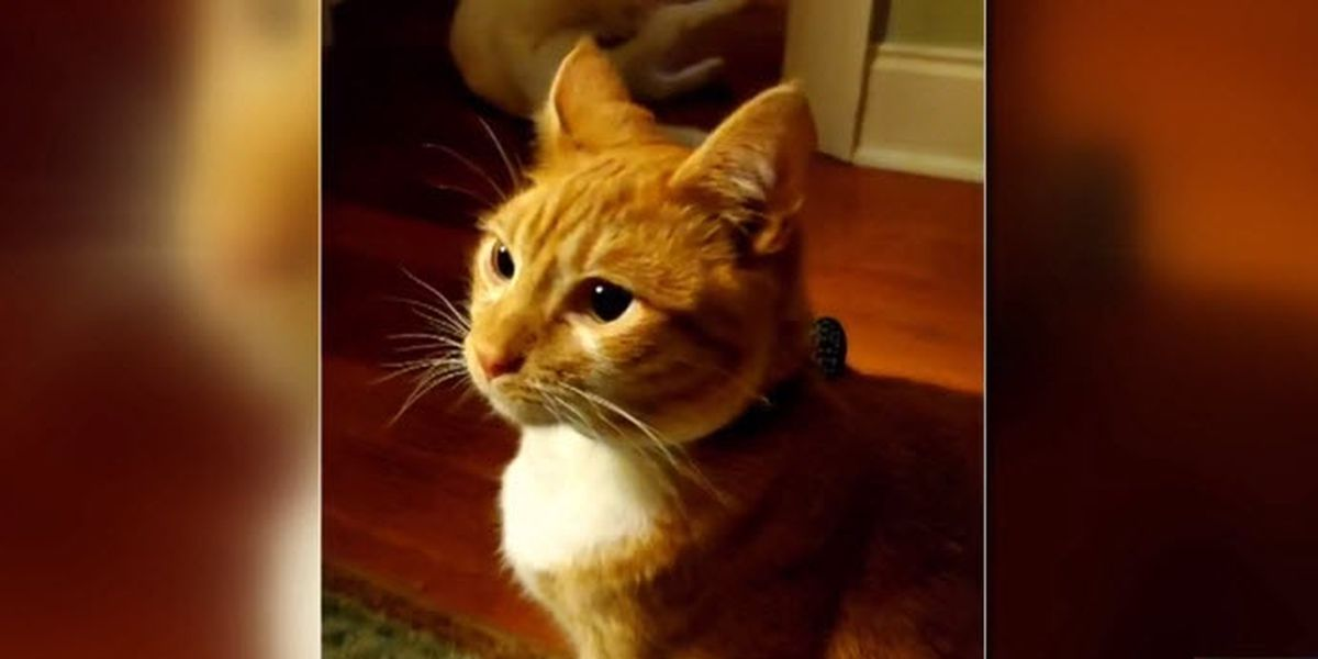 NC cat up for 'Wackiest Pet Name of the Year' award
