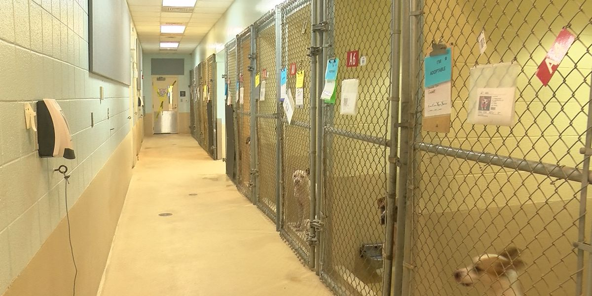 Rock Hill dog in quarantine after biting 5-year-old boy