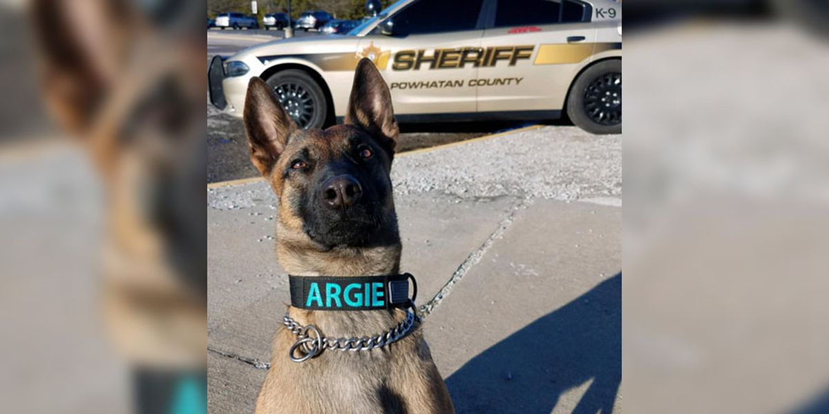 Shelter dog joins Powhatan Sheriff's Office as K-9