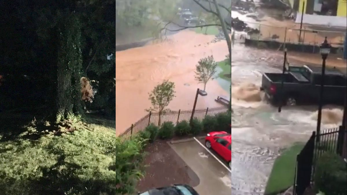 Heavy downpour causes downed trees, flooding in Charlotte