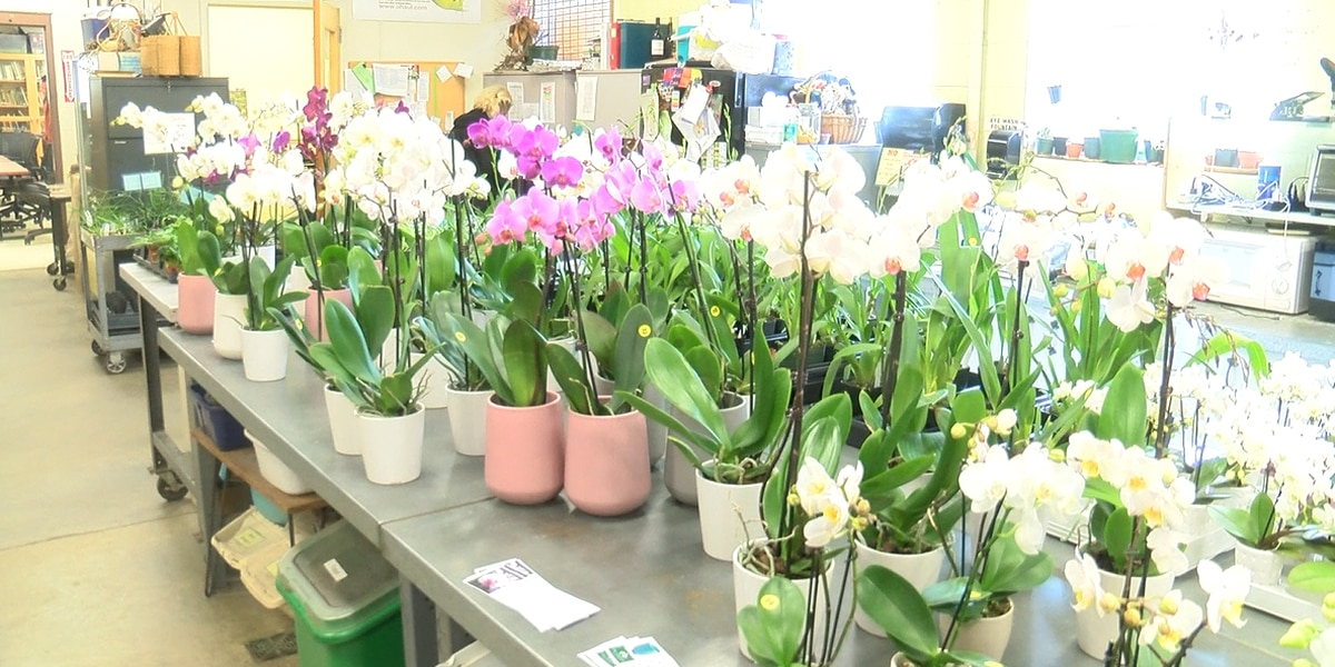 Tired of roses? How about an orchid for your love and a lesson? UNC Charlotte shares the love