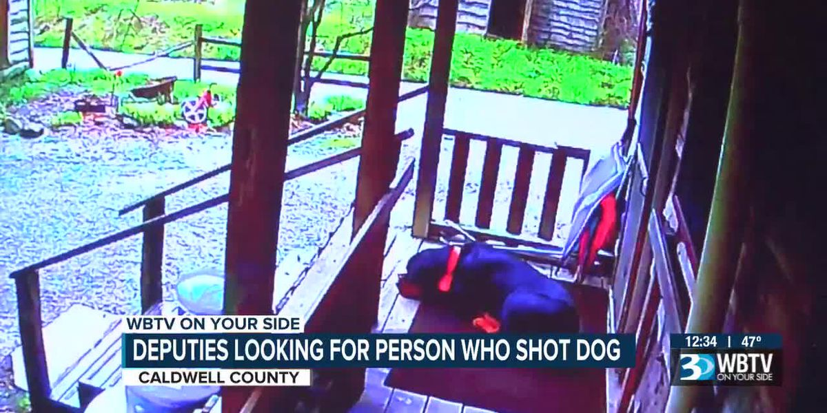 Caldwell County deputies looking for person who shot dog