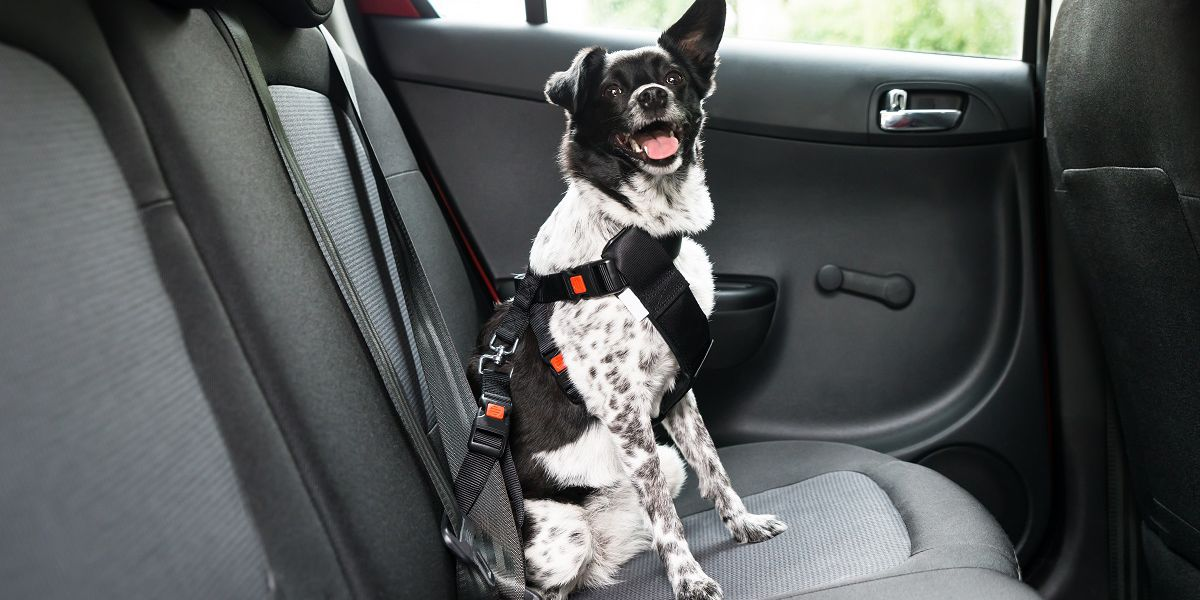 5 road trip tips for traveling with pets this holiday season