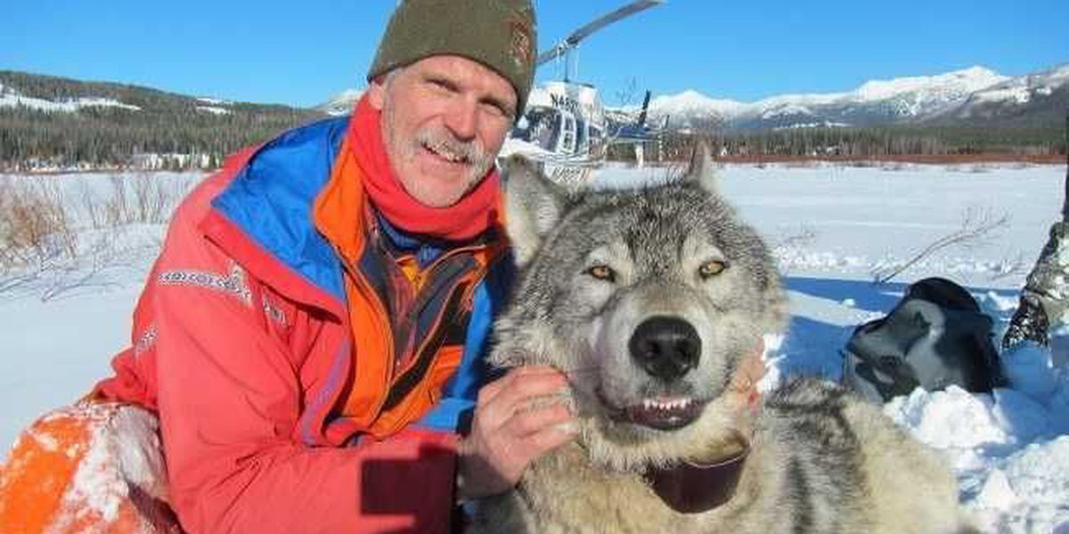 Yellowstone Wildlife biologist to speak on wolves at Center for Environment