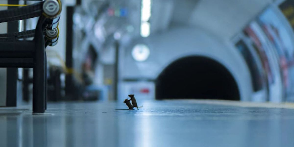 Picture of mice squabbling on subway platform wins prestigious award