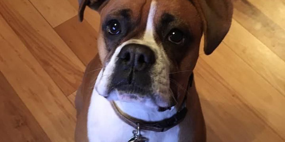 Taylorsville couple loses dog on vacation in Holden Beach