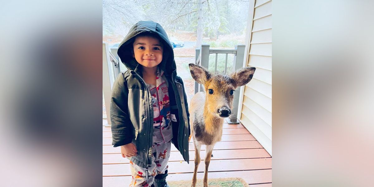 4-year-old Virginia boy befriends baby deer while playing outside