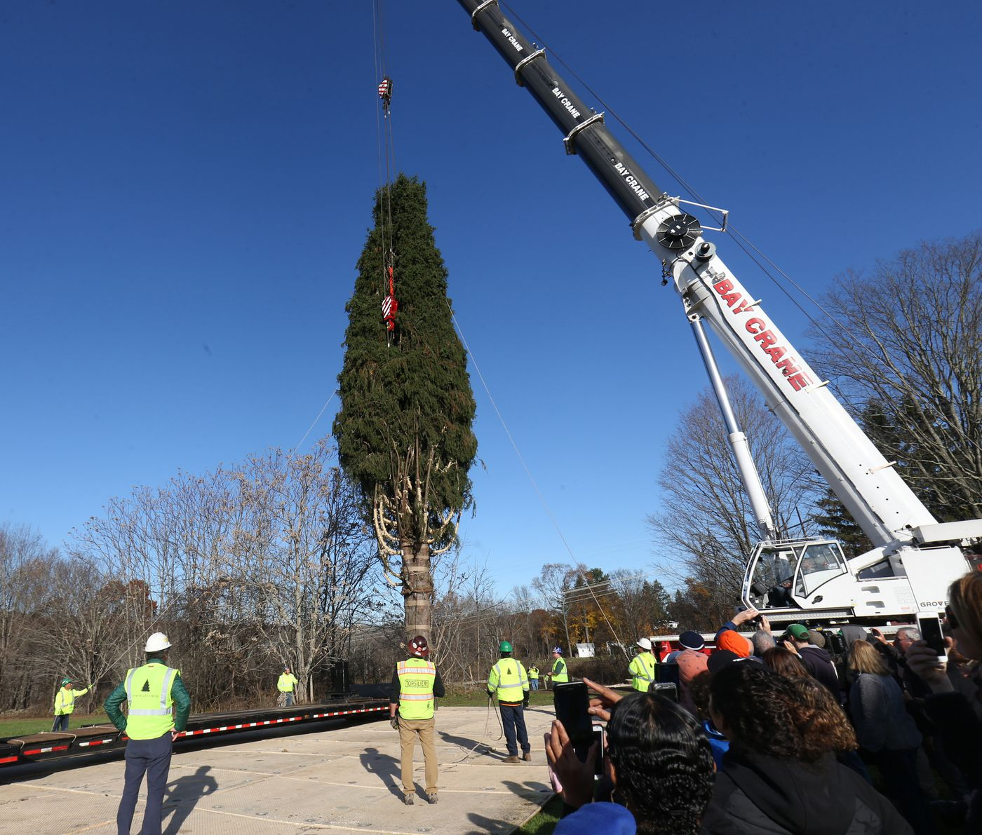 Christmas Tree Shop Poughkeepsie Ny: Rockefeller Christmas Tree Cut Down At Upstate NY Home