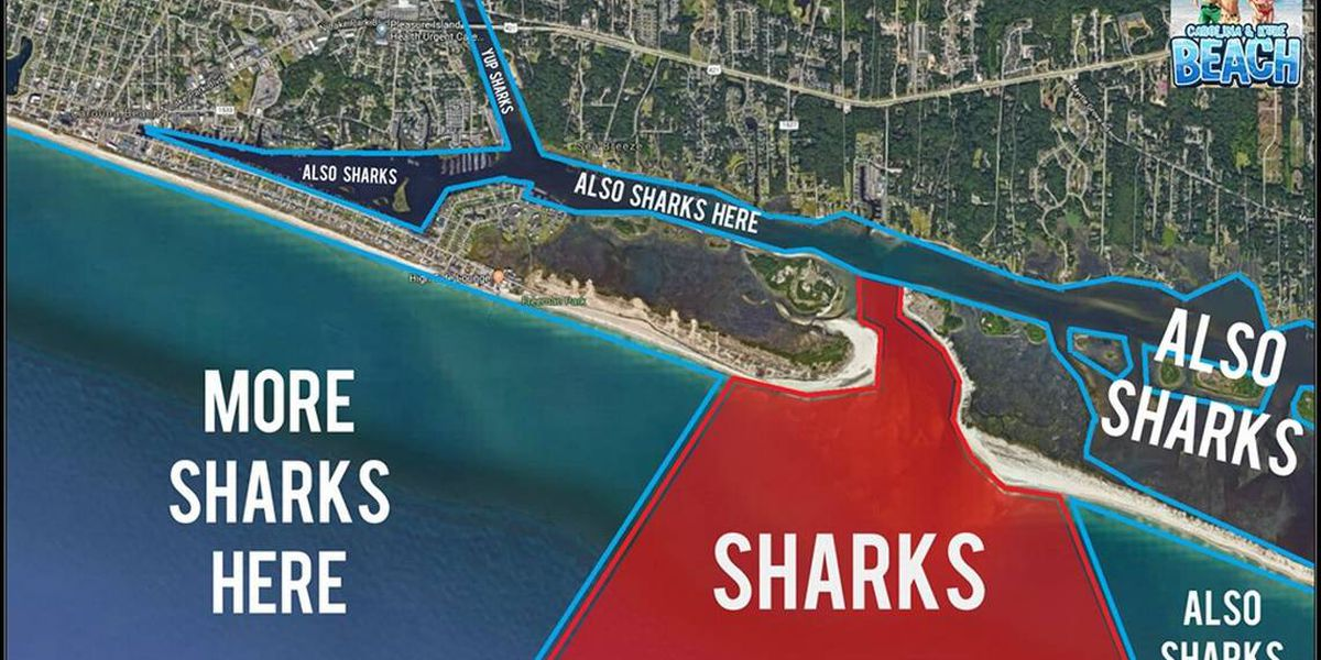Shark Mystery Solved New Map Shows Exactly Where Sharks Are Lurking Off Nc Beaches