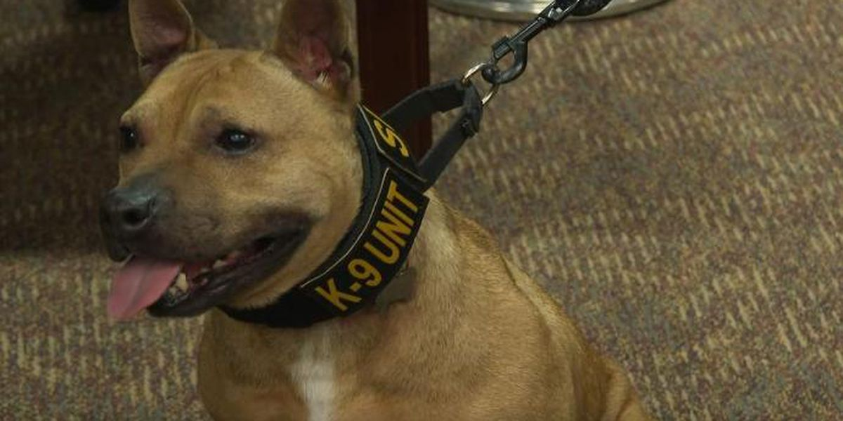 NC Sheriff's Office adds Pit Bull to K-9 Unit