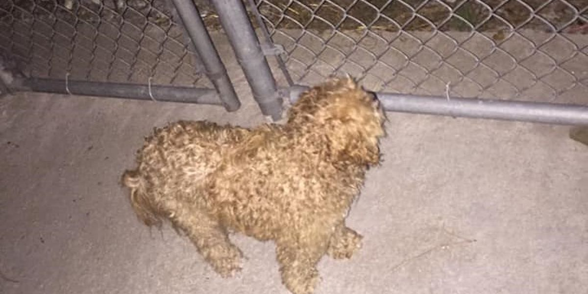 Sunset Beach officers say someone stole dog from police custody