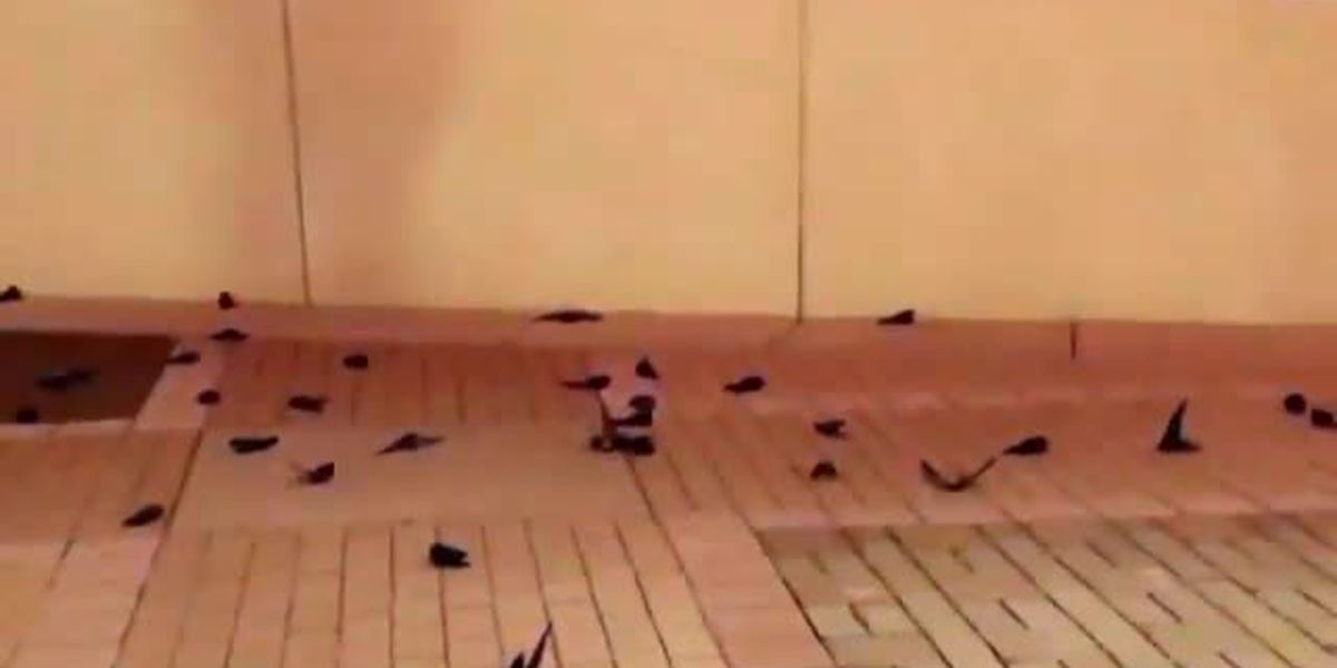 Dozens of birds dead after hundreds fly into NASCAR Hall of Fame