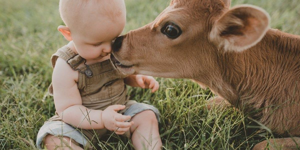 ADORABLE: Baby calf and baby human make friends during photo shoot