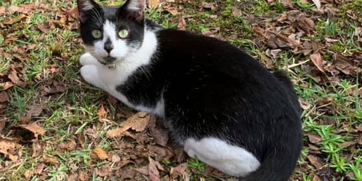 Goose Creek police introduce new department cat