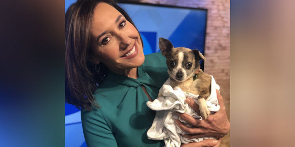 Some puppies rescued from 'monstrous' puppy mill ready for adoption at Humane Society of Charlotte