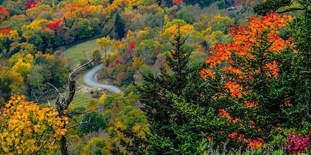 Leaf peepers in NC can expect an explosion of color this fall, experts say