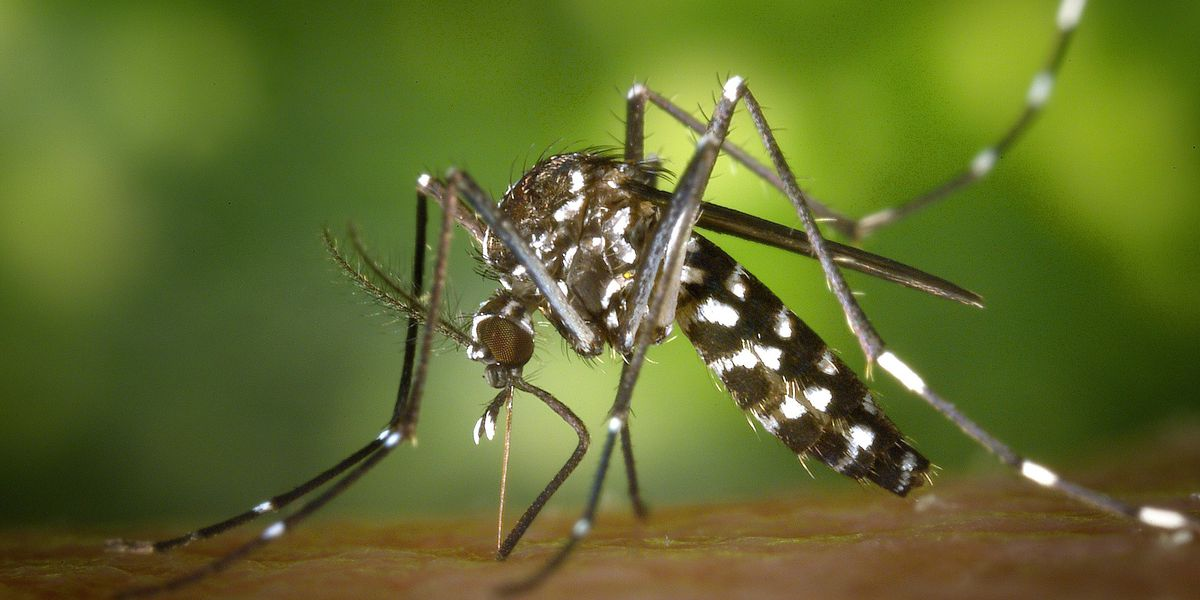 Case of West Nile virus confirmed in Rock Hill, S.C.