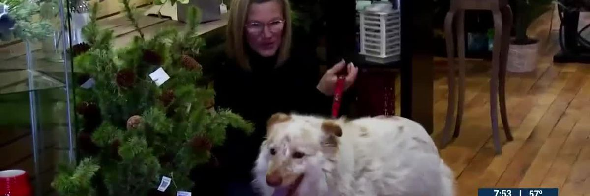 Testing dogs for cancer