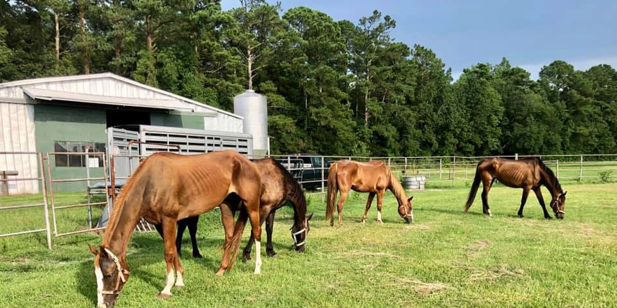 Emaciated, neglected horses found on farm in Cape Fear Region