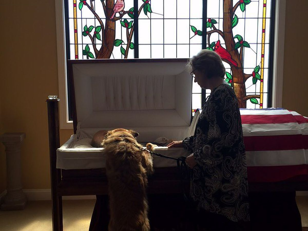 Special bond: Photo captures dog's 'goodbye' to owner