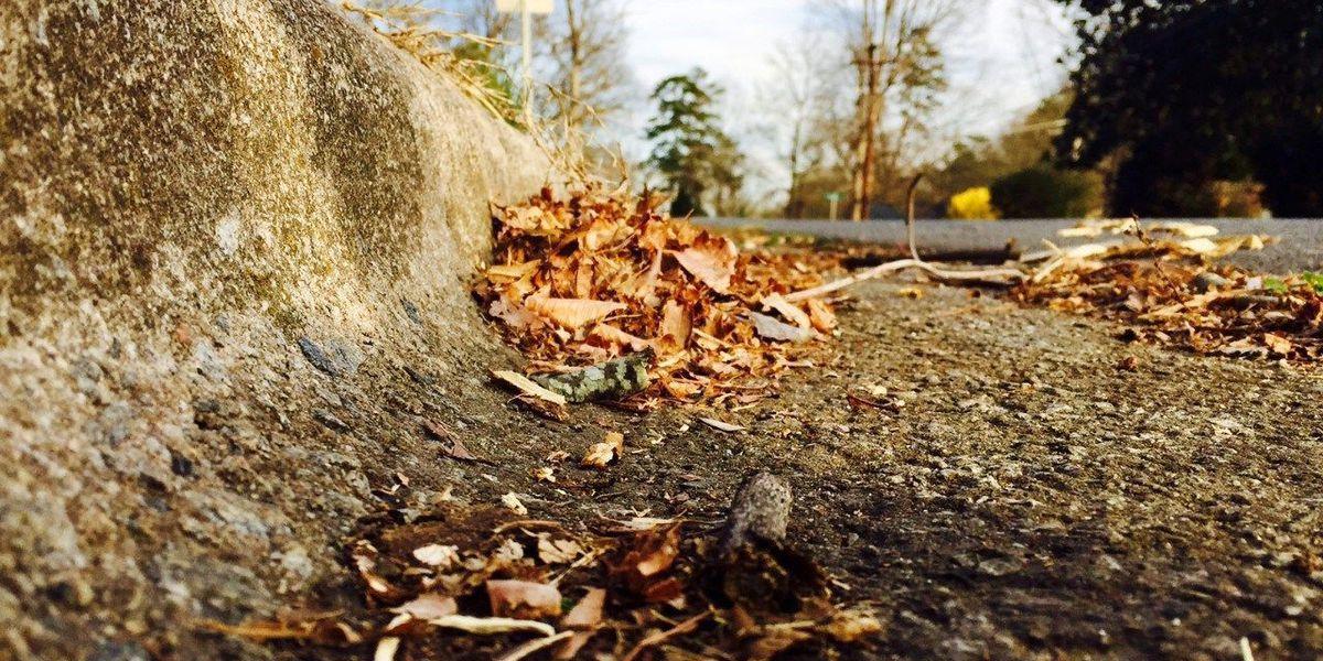 Loose leaf collection begins October 19 in Kannapolis