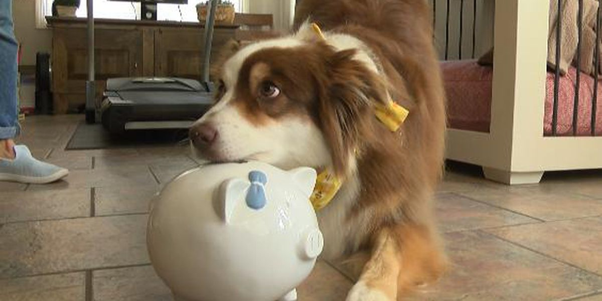 Ivy the Aussie becomes internet star with incredible tricks